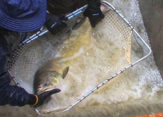 Indian Creek Fish Hatchery Tours